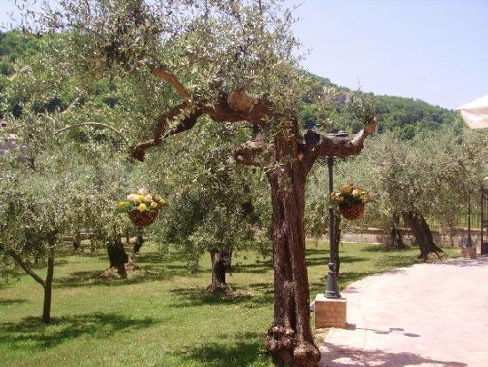 La Ginestra: giardino