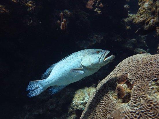 Splash Inn Dive Resort: Diving