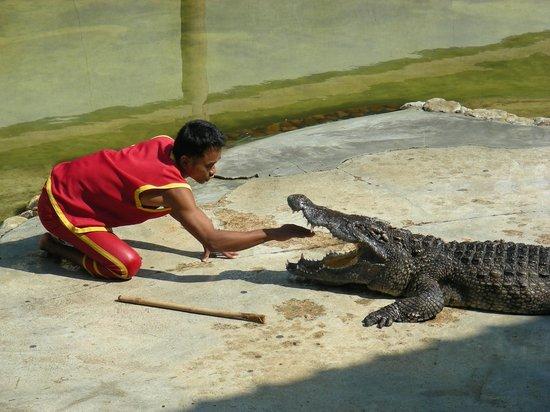Samutprakan Crocodile Farm and Zoo : a part of the show