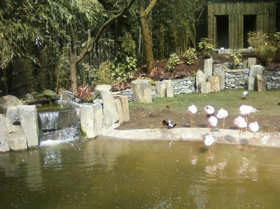 Oregon Zoo: The new flamingo exhibit