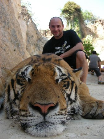 Tiger Temple ( Wat Pa luang Ta Bua): still can't believe it--- close to this amazing animal!