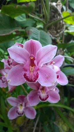Loro Parque: Orquidea