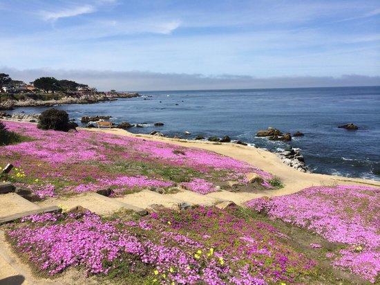 Monterey Peninsula Recreational Trail: View along the bike trail