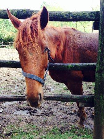 Agriturismo Renaccino: Horse