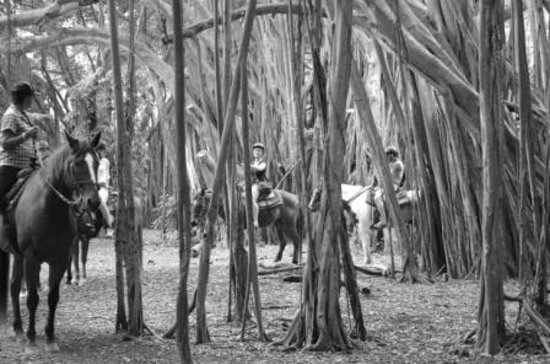 Oahu Photography Tours : Horseback riding in the Banyan Trees
