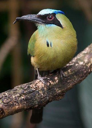 Henry Vilas Zoo: The aviary