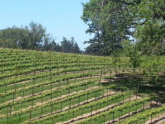 Fort Ross Vineyard & Winery : Beautiful spot.