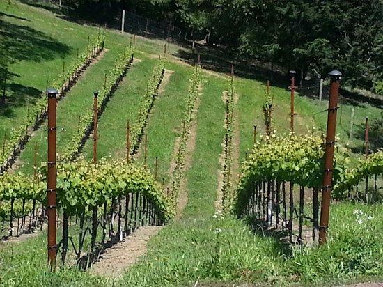 Fort Ross Vineyard & Winery : All estate grown.