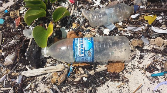 Dreams Tulum Resort & Spa : Plstic bottle brought by the sea from Jamaika