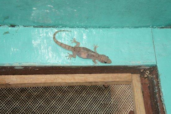 Kerala Bamboo House: Bathroom - she eats mosquitoes this is useful!