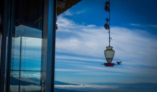 Poas Lodge and Restaurant: Colibríes en el desayuno
