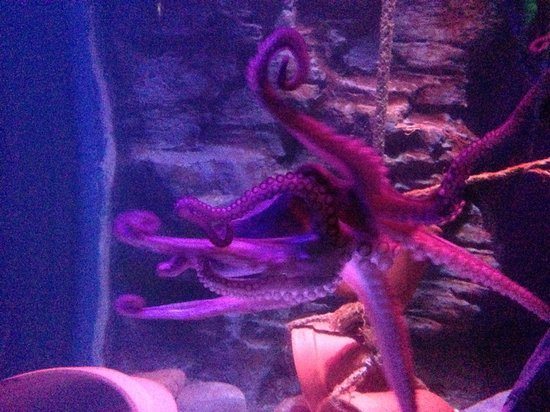 Sea Life Blackpool : octo