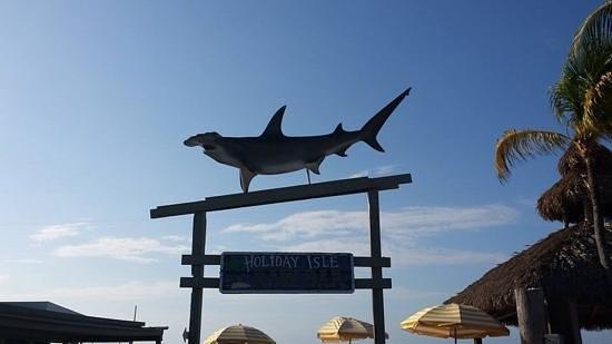 Postcard Inn Beach Resort & Marina: great drinks and food...wonderful atmosphere