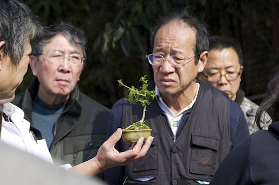Shanghai Pathways-Private One-day and Walking Tours: Bonsai purchase.