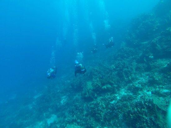 Las Rocas Resort & Dive Center: Diving just off the shore