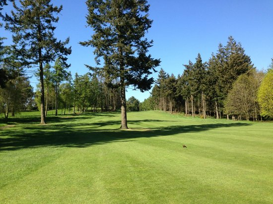 Carden Park Hotel: 16th of cheshire course