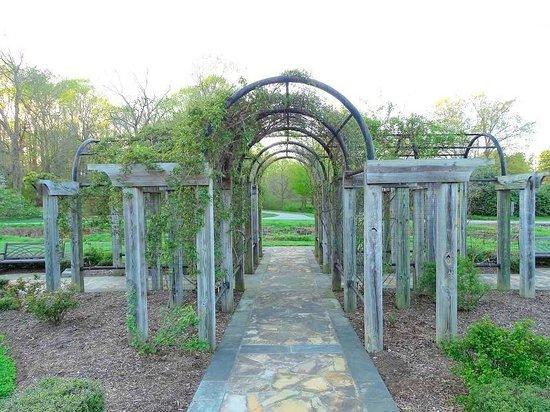 The Greensboro Arboretum: rose arbor