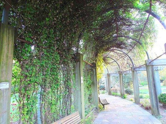 The Greensboro Arboretum: ivy arbor