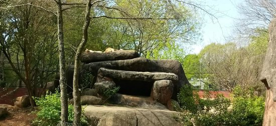 Zoo Atlanta : Sleepy Lions