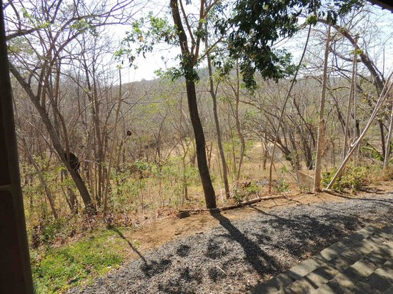 Rancho Cecilia Nicaragua : Wooded area outside room