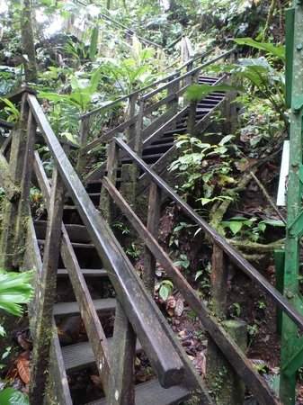 Veragua Rainforest Park: steps to get to the waterfall