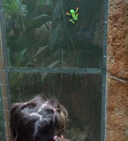 Arenal Natura Parque Ecológico: My daughter watching the red eye tree frog
