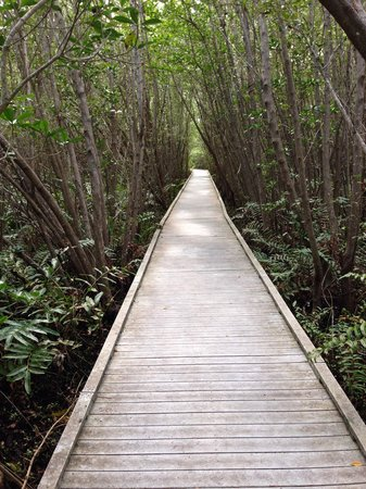 Four Mile Cove Ecological Preserve : Awesome trails