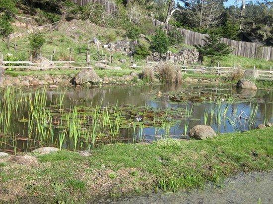 Brewery Gulch Inn: Lily pond