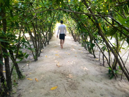 Lissenung Island Resort : The tree covered passage to our bungalow