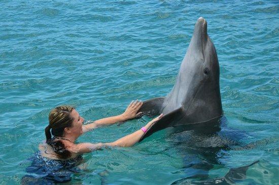 Dolphin Academy Curacao: Very nice to meet you!