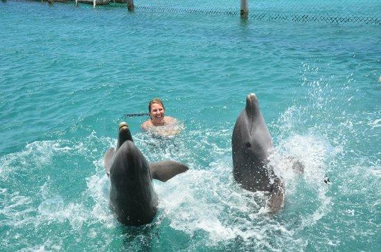 Dolphin Academy Curacao: Spin anyone?