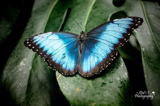Butterfly Picture Of Victoria Butterfly Gardens Central Saanich Tripadvisor
