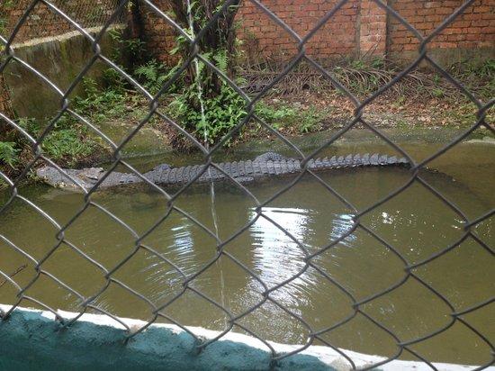 Jong's Crocodile Farm & Zoo: Such a beautiful Creature :)