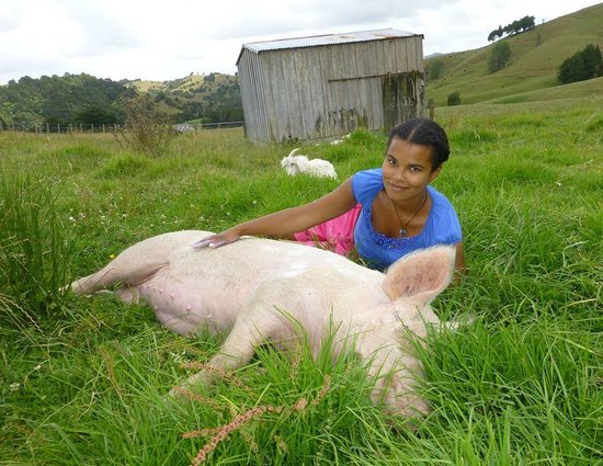 A Kiwi Farmstay: Lucky the pig