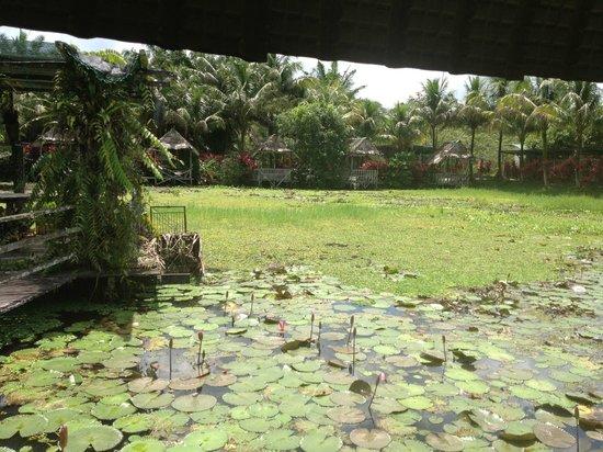 Jong's Crocodile Farm & Zoo: The Heaven : The lily pond