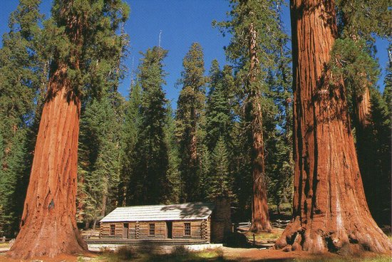 BEST WESTERN PLUS Yosemite Gateway Inn: Red Wood trees on each side of a cabin in Yosemite