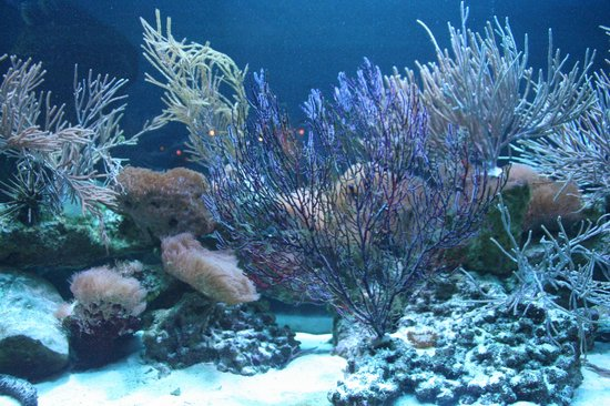 Loggerhead Marinelife Center: Reef