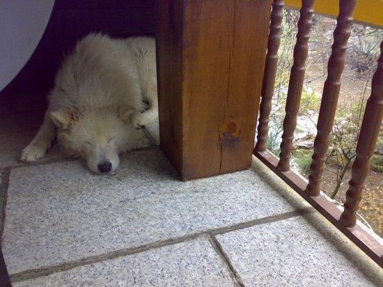 LOS FRUTALES: Хозяйский пёс.