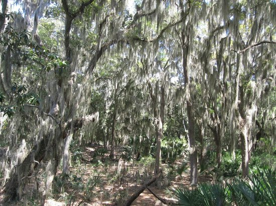 The Lodge on Little St. Simons Island: Hiking Through The Wilds
