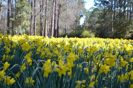 Brookgreen Gardens: flowers