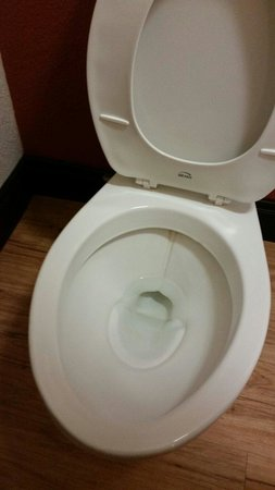Red Roof Inn Jacksonville - Southpoint: Toilet was stained.