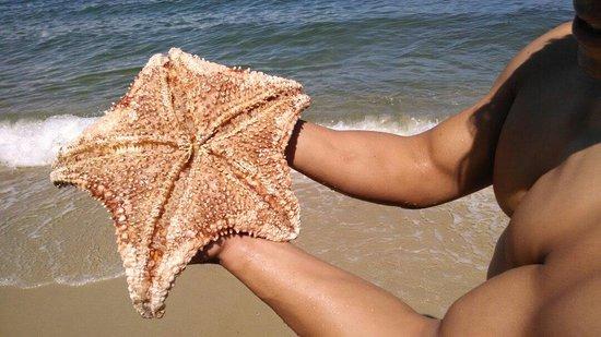 Angra Beach Inn: Estrela do mar encontrada na praia privativa