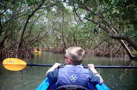 Almost Heaven Kayak Adventures : inside the mangrove tunnels