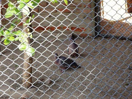 Parque Zoo-botanico da Caatinga: Asa Branca, símbolo do sertão