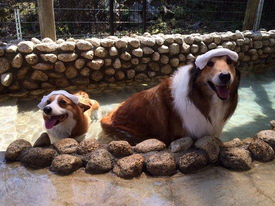 Partners House Yuasa: Love the hot spring!