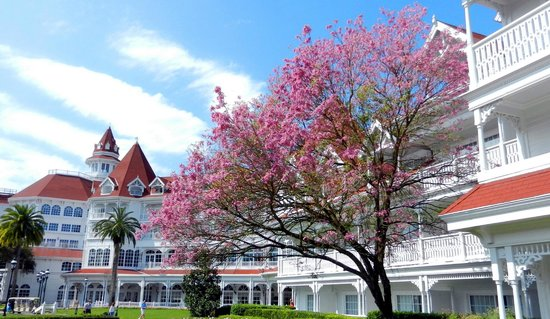 Disney's Grand Floridian Resort & Spa : Dogwoods in bloom
