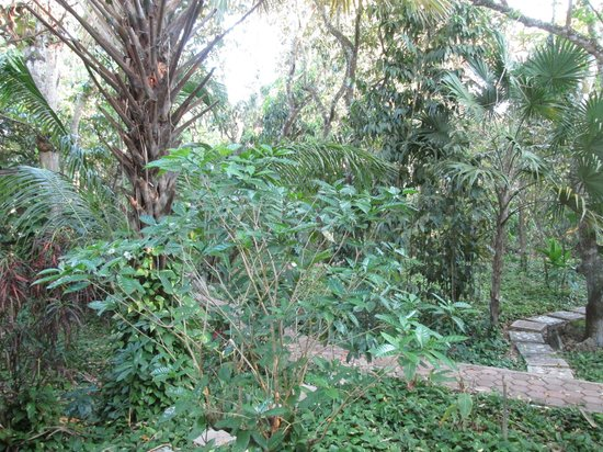 Ecotel Quinta Regia: Lovely jungle garden right off our balcony