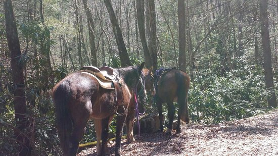 Hico, WV: Horses Henry, Strawberry and Cherokee taking a rest while we took a look at the waterfall!