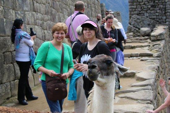 Machu Picchu: Hola Llama!!