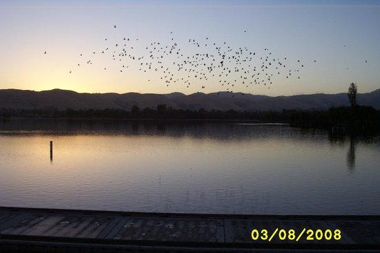 Central Park: Pigeons in flight